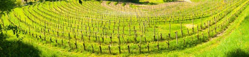 Breiter Panoramablick eines Weinbergs nahe Buttrio lizenzfreies stockbild