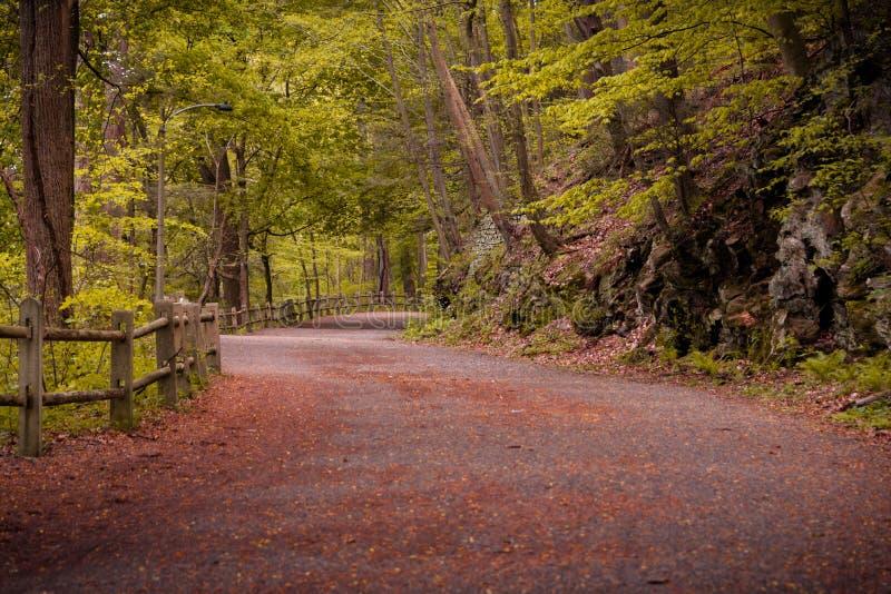 Breiter Weg durch Wald stockbild
