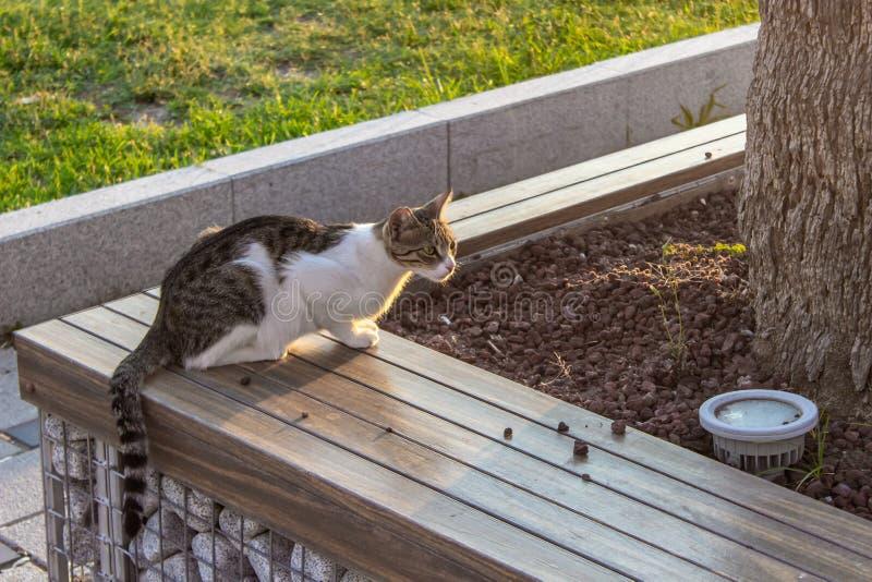 Breites süßes nettes cate schoss auf der Straßenbank auf Sonnenuntergangzeit stockfotografie