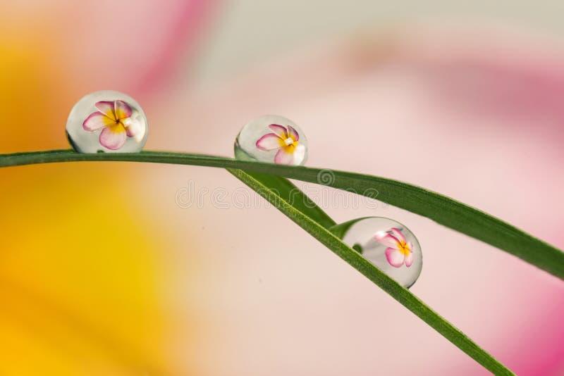 Download Brekingsbloemen In Waterdalingen Stock Afbeelding - Afbeelding bestaande uit dewdrop, macro: 107705947
