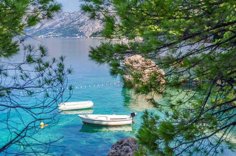 Brela,克罗地亚 有杉木透明的亚得里亚海和芳香的一个美妙的地方Brela在夏天 达尔马提亚,马卡尔斯卡 免版税库存图片
