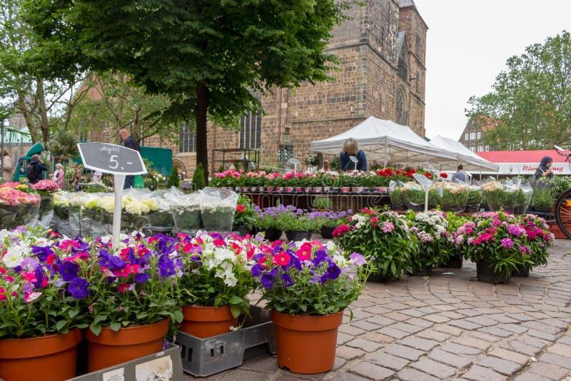 Bremen, Deutschland - 06/13/2019: Blumenmarkt mit unterschiedlichem eingemachtem Blumen anf Preiszeichen Markt auf Stadtplatz stockbilder
