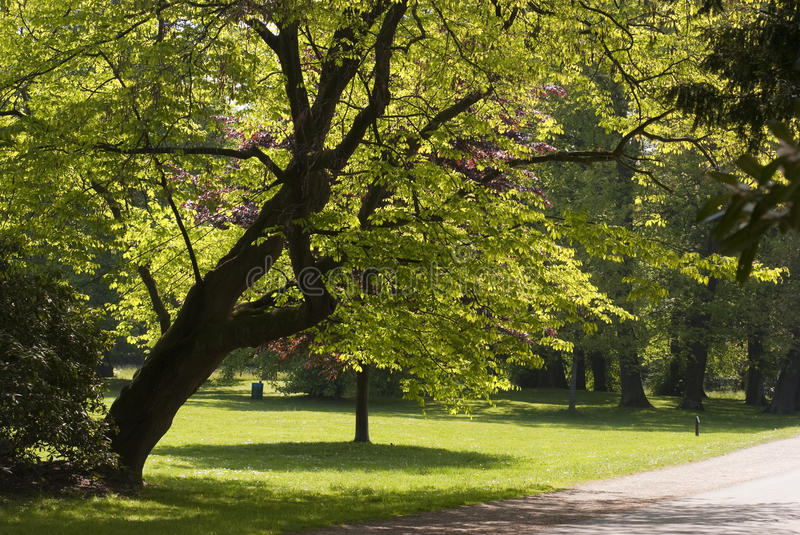 Bremen Park. Springtime park and patch a sunny day in Bremen, Germany royalty free stock photo