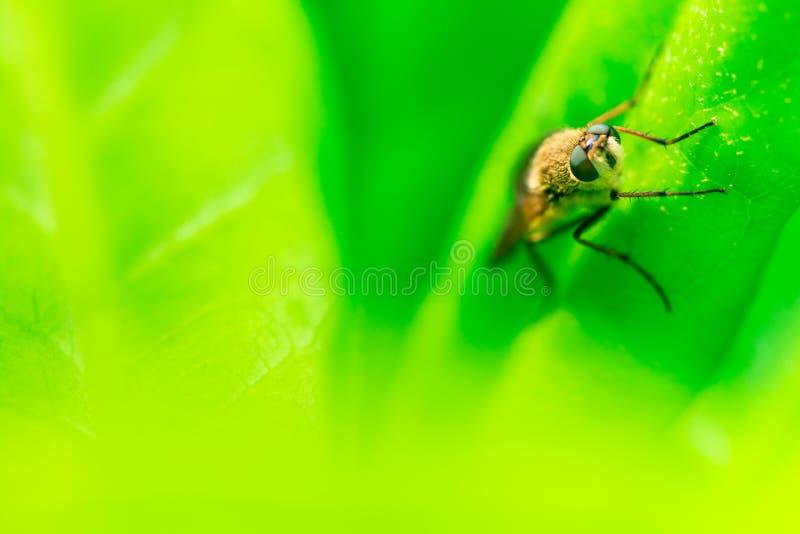 Bremse, die auf einer Grünpflanze, Nahaufnahme, Makrofoto sitzt stockbilder