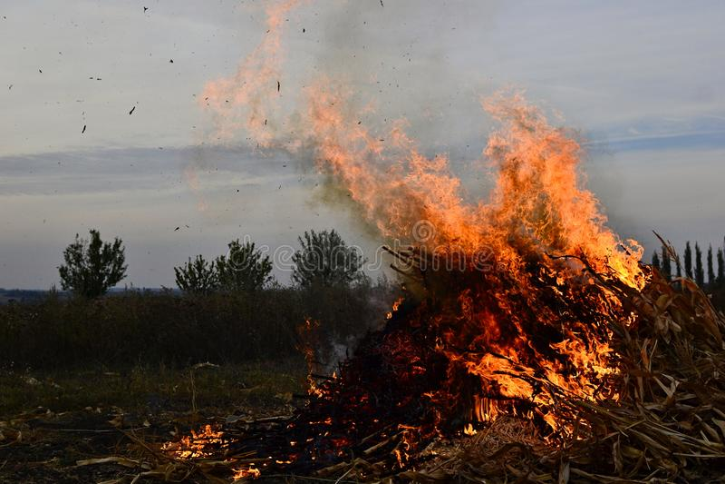 Brennen des trockenen Maisstrohrechtes auf dem Landwirtschaftsfeld am Abend stockfotografie