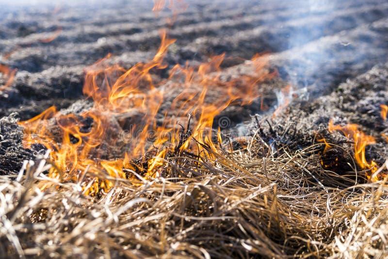 Brennen von Überresten in der landwirtschaftlichen Bearbeitung stockfotografie