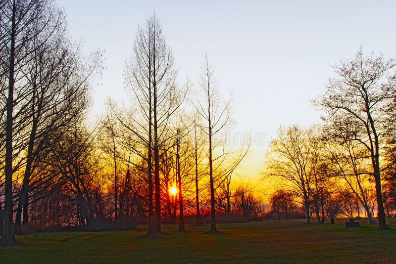 Brennende Bäume lizenzfreie stockfotografie