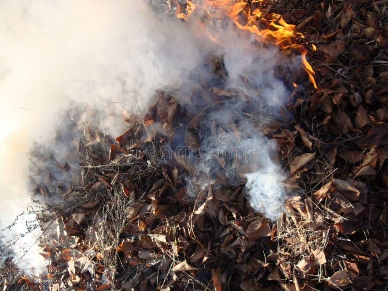 Brennende Blätter Flammen, graue Asche und weißer Rauch lizenzfreie stockbilder