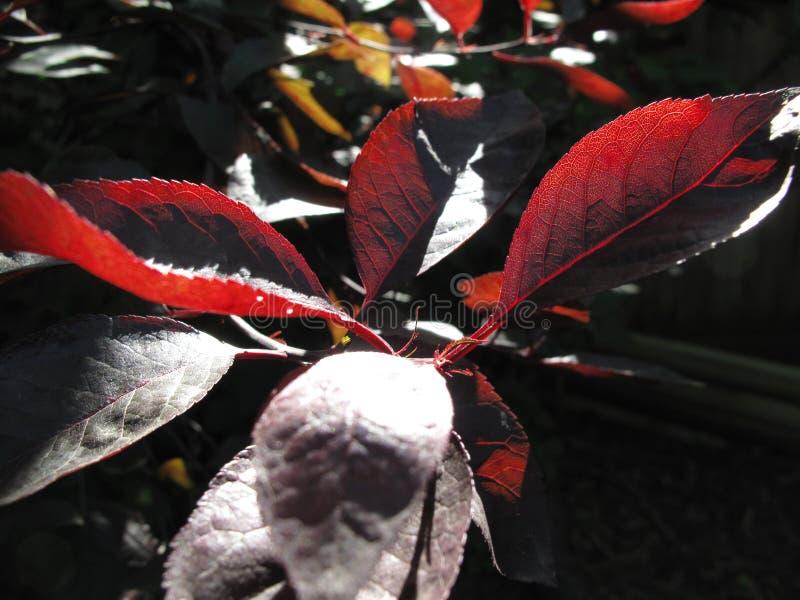 Brennende Blätter morgens stockbild