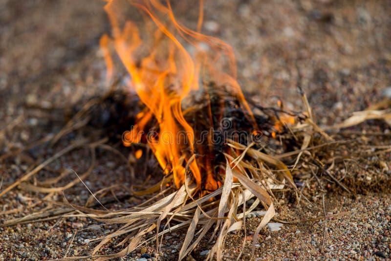 Brennende Nahaufnahme des wilden Grases stockfoto