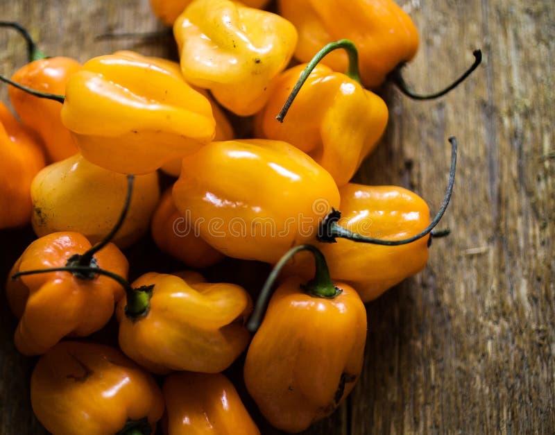 Brennende orange Habaneropaprikas lizenzfreie stockfotografie