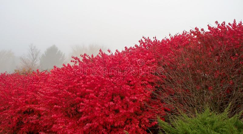 Brennender Busch, nebelhafter Morgen stockbild