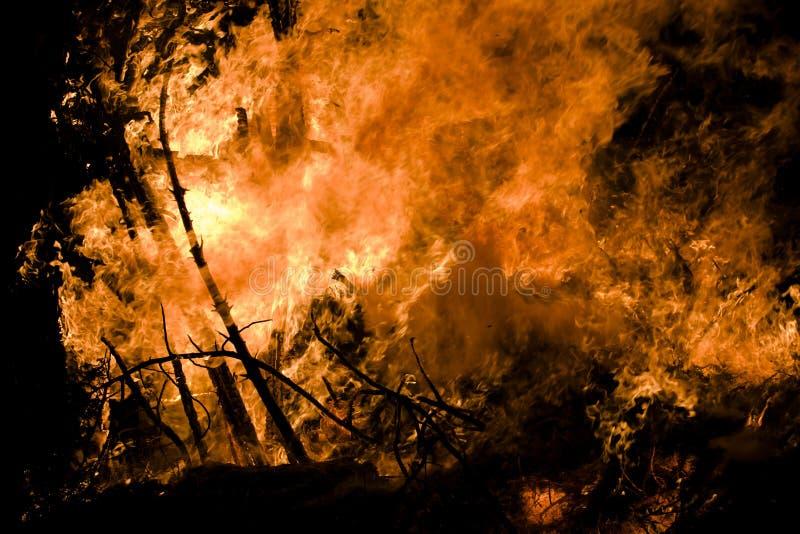 Brennender Wald lizenzfreie stockfotos