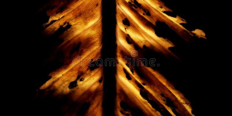 Brennendes Blatt stockfoto