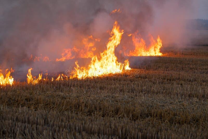 Brennendes Flammen-Feld des trockenen Strohs stockfoto