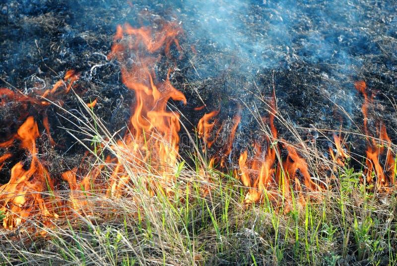Brennendes Gras stockfotos