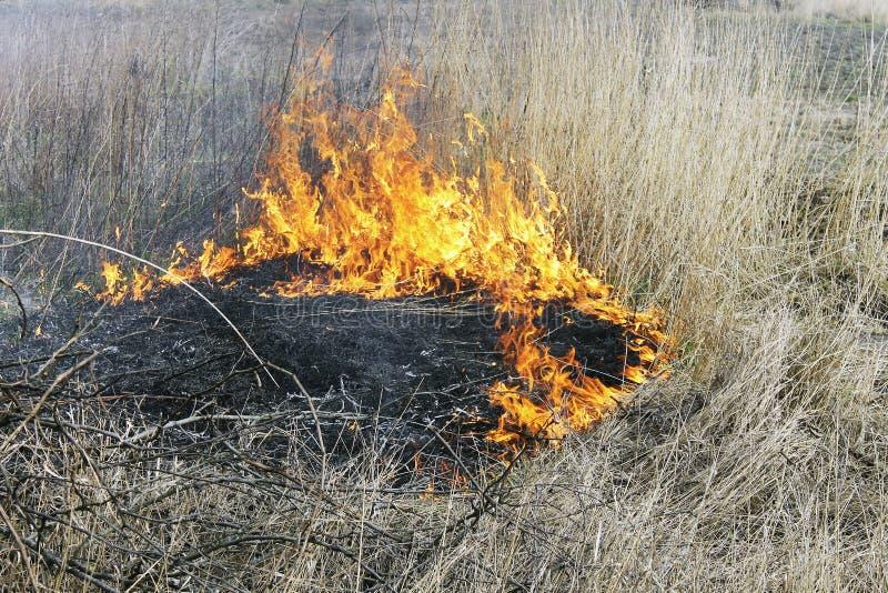 Brennendes Gras lizenzfreie stockfotografie