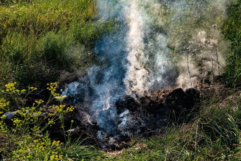 Brennendes Gras in der Natur stockbilder