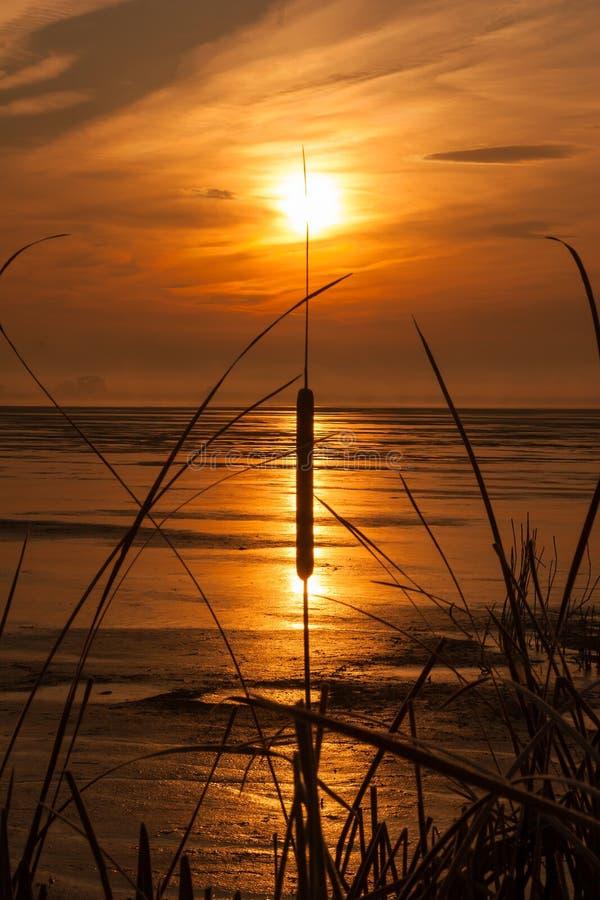Brennendes Schilf in der Sonnenuntergangreflexion lizenzfreies stockfoto