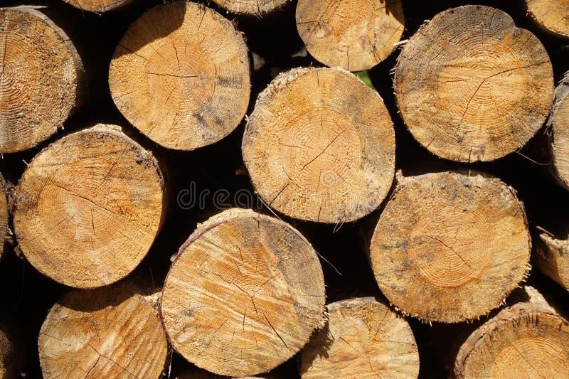 Brennholz im Wald stockfoto
