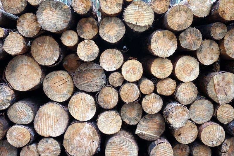 Brennholz im Wald lizenzfreie stockfotos