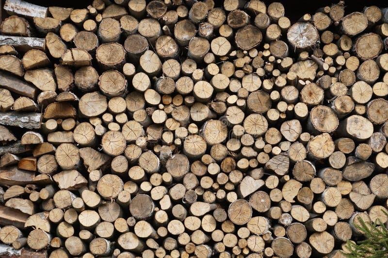 Brennholz im Wald lizenzfreie stockbilder