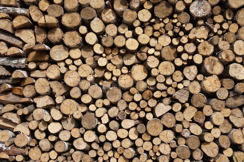 Brennholz im Wald stockbild