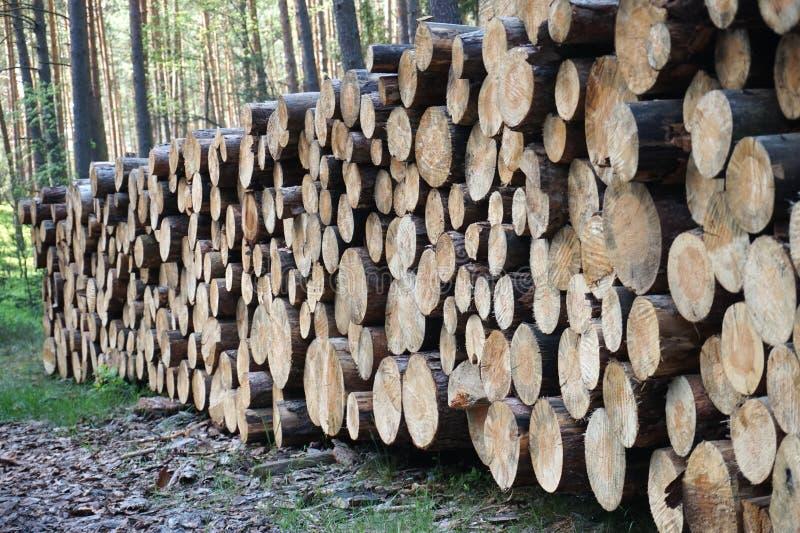 Brennholz im Wald stockbilder