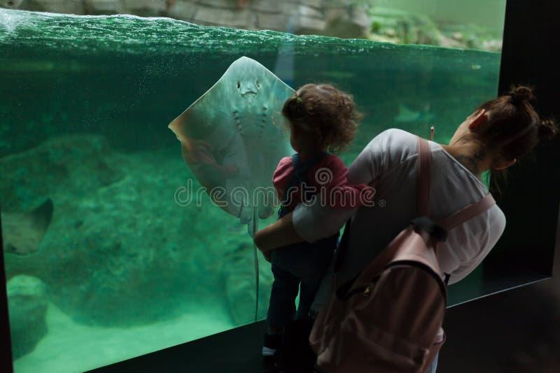 Brest, Francia mamá del 31 de mayo de 2018 y su pequeña hija está mirando pescados y animales de mar en el acuario del Oceanopoli imagen de archivo