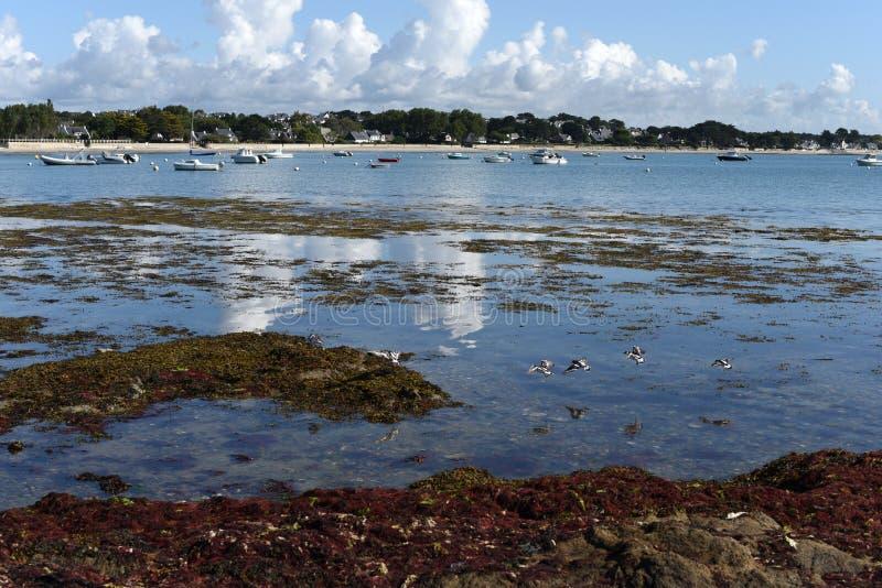 Bretagne-` s Ufer mit blauem Meer, Segelboote, Häuser stockfotografie