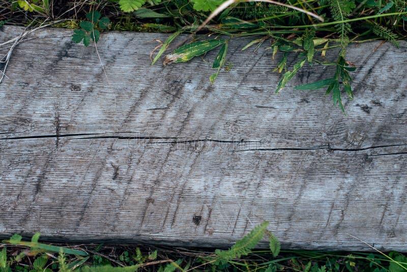 Brett trä för träbräde, bakgrund med grönt gräs Texturträd för att skriva text royaltyfria bilder