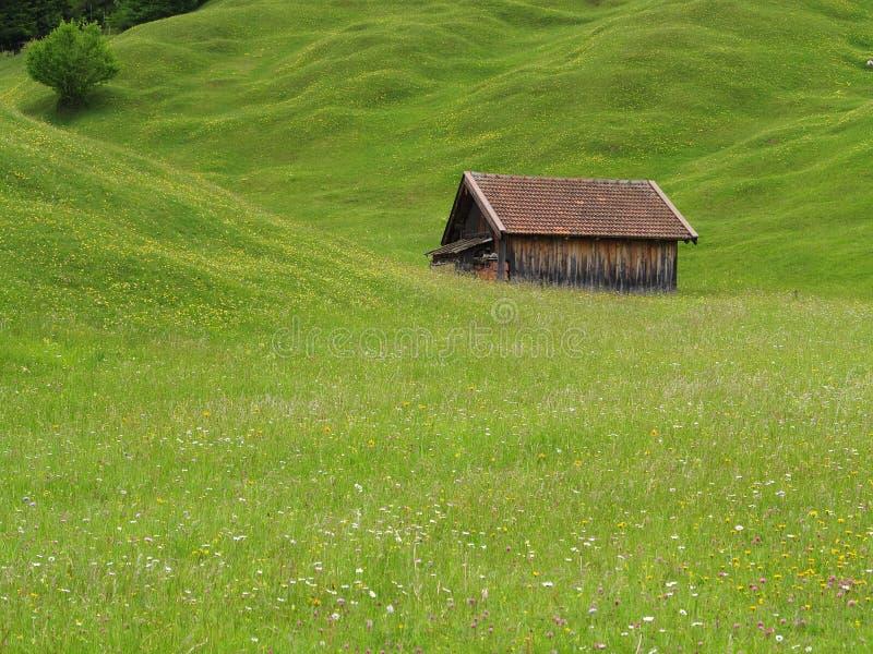 Bretterbude im Hayfield des alpinen Hochlands lizenzfreies stockfoto