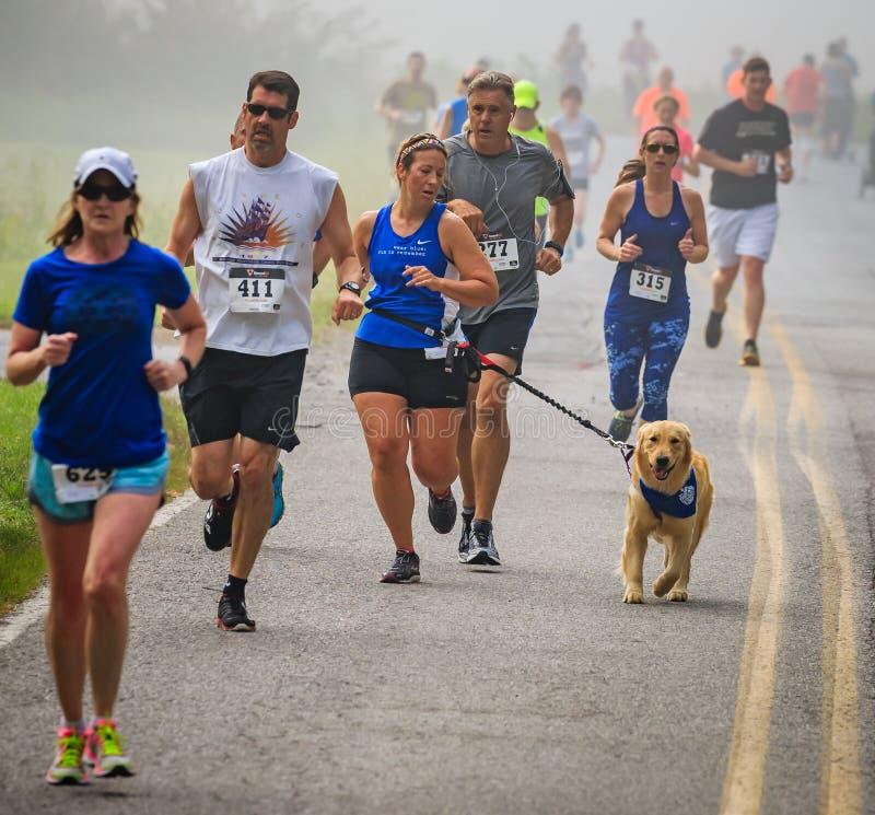 BREVARD NC-MAY 28, 2016 - den lyckliga den inkörda kvinnan och hennes hunden den vita ekorren springer i Brevard, NC 2016 Loppet  royaltyfri fotografi
