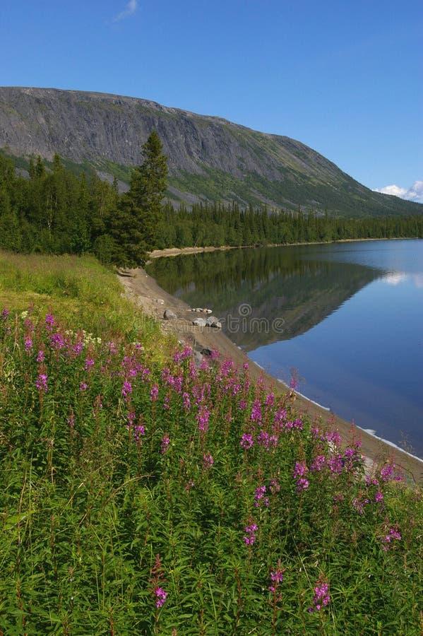 Breve estate nordica immagine stock libera da diritti