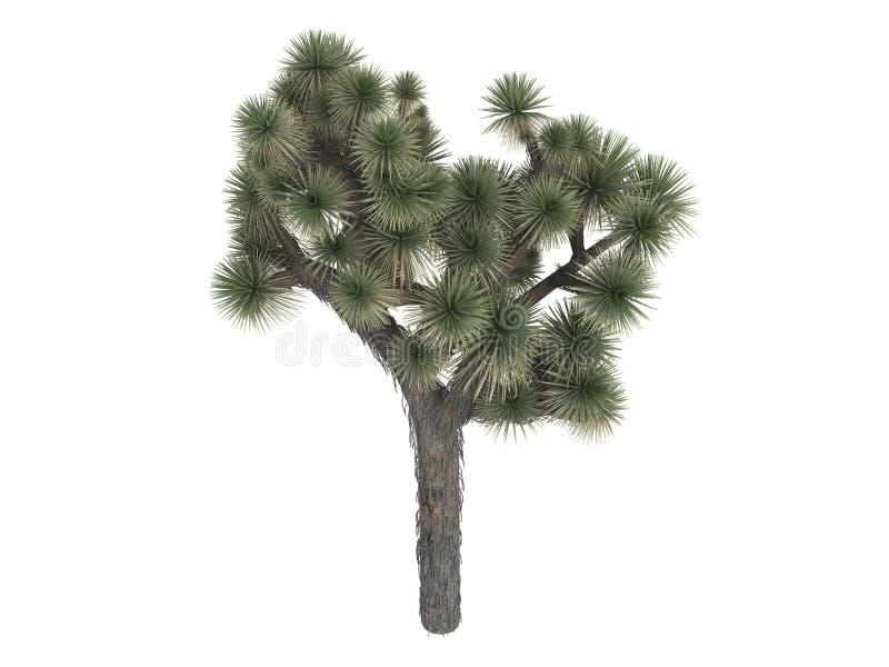 brevifolia约书亚树丝兰 向量例证