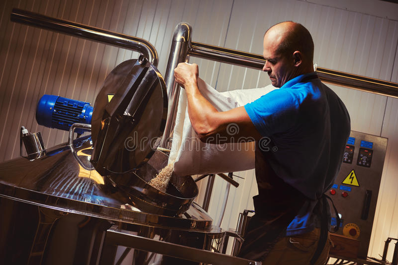Brewer in brewhouse. Pouring out the malt to the tank royalty free stock image
