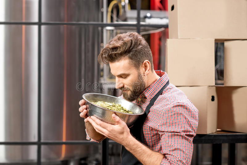Brewer with hops. Brewer with green hops dressed in apron and checkered shirt at the manufacturing. Epertising quality of beer ingredients royalty free stock images