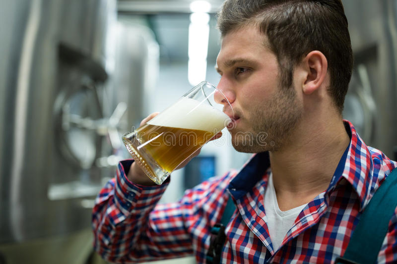 Brewer testing beer. At brewery factory royalty free stock images
