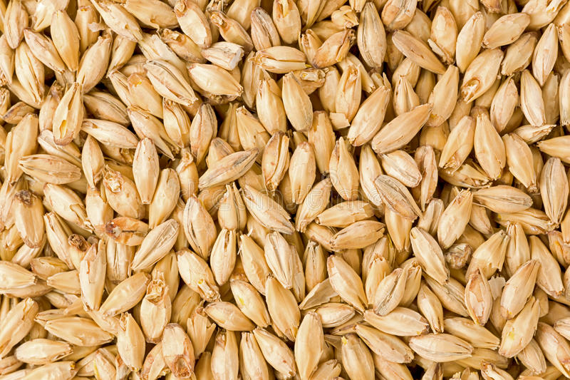 Brewers Malt royalty free stock photo