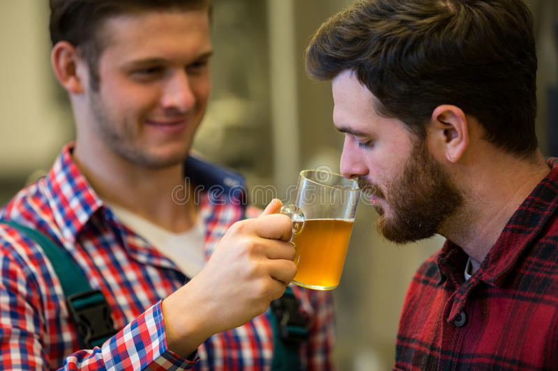 Brewers smelling beer. At brewery factory royalty free stock images