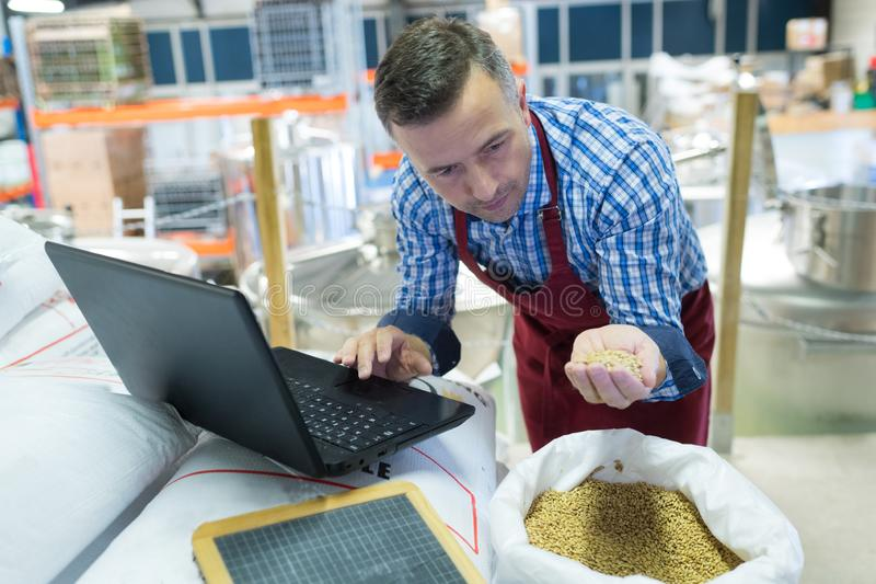 Brewery worker with laptop inspecting grain royalty free stock image