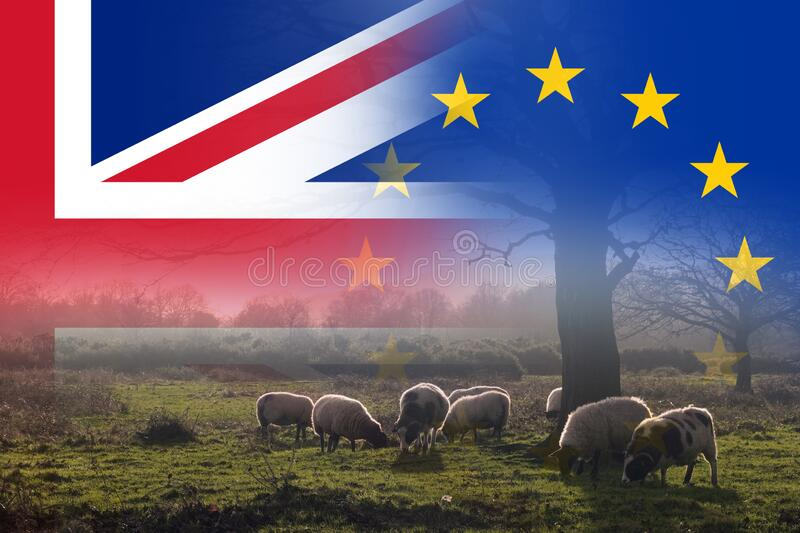 Brexit concept. A field with a flock of sheep. With the flags of the Union Jack and the E.U over layered on top.  stock images