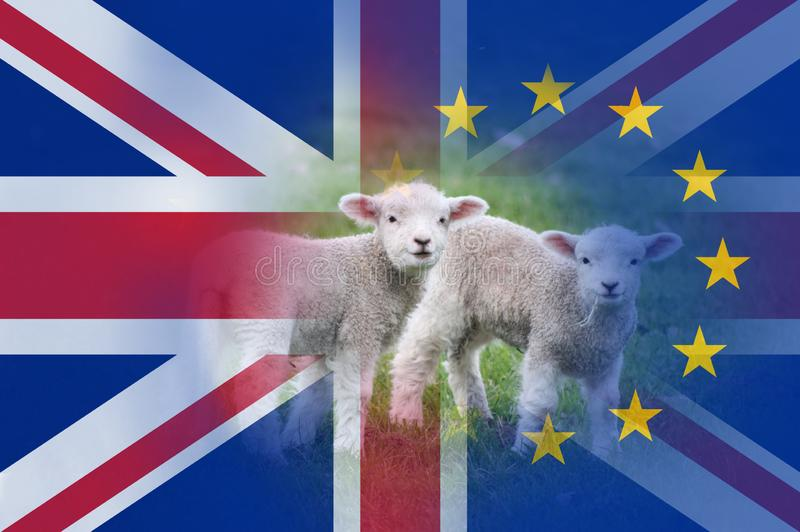 Brexit concept. Two lambs in a field With the flags of the Union Jack and the E.U over layered on top stock images
