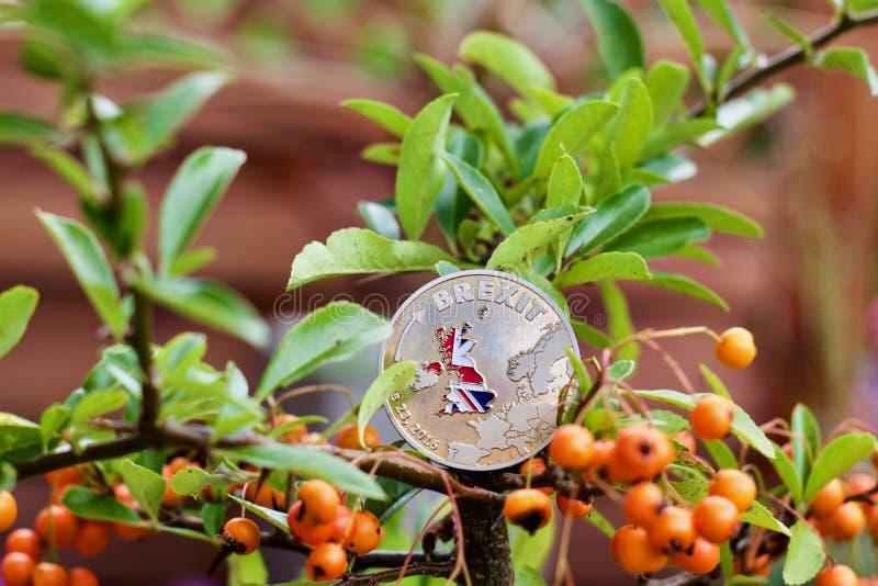 Brexit moneta na drzewie obrazy royalty free