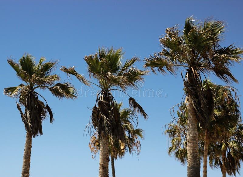 Brezza di California fotografia stock