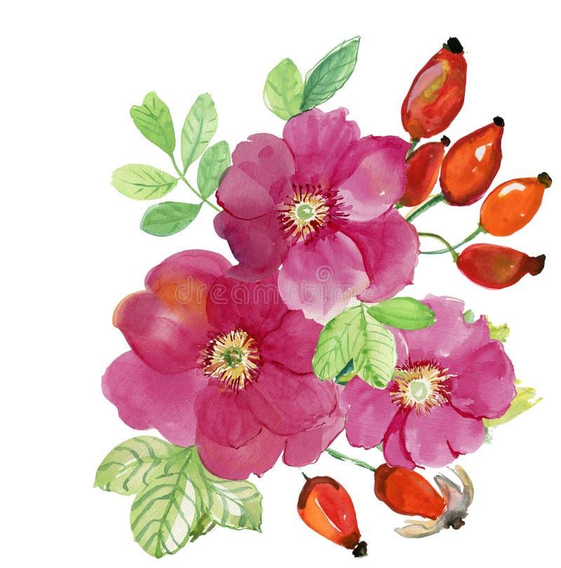 Briar Blommor och bär royaltyfri illustrationer