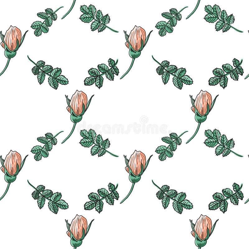 Briar rose color sketch seamless royalty free illustration