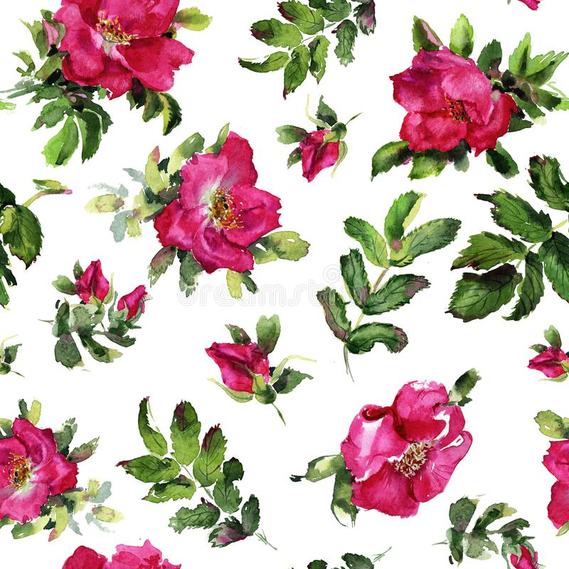 Briar Rose flowers handmade watercolor seamless pattern gentle stock illustration