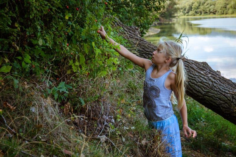 Briar Sammeln des kleinen Mädchens nahe dem Fluss lizenzfreie stockbilder