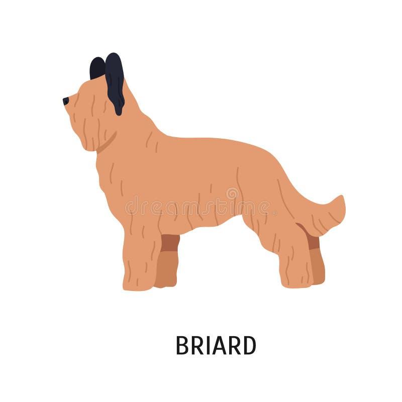 Briard of Berger DE Brie Aanbiddelijke grote het hoeden hond of herdershond met lang die haar op witte achtergrond wordt geïsolee stock illustratie